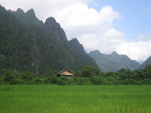 Vang Vieng Paddy Field
