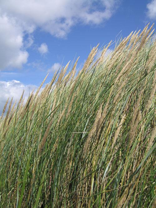 irvine grass